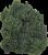 Broccolini Perspective: left